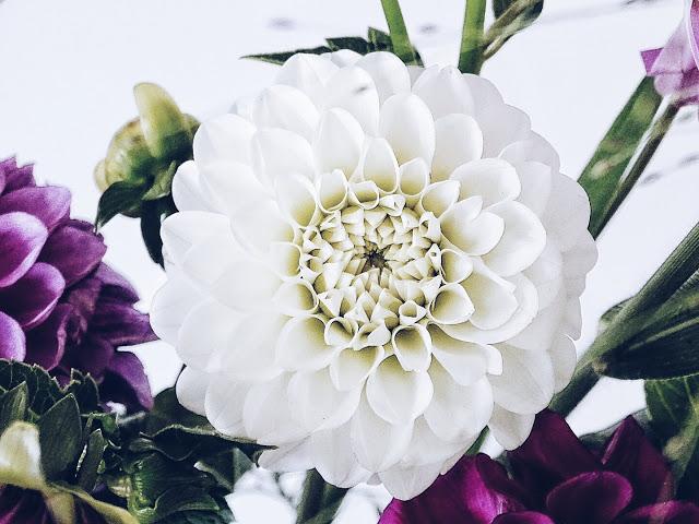 Auf der Mammilade|n-Seite des Lebens | Lifestyle-Blog | Dahlien | Blumen | weiße Dahlien | dahlia | flowers