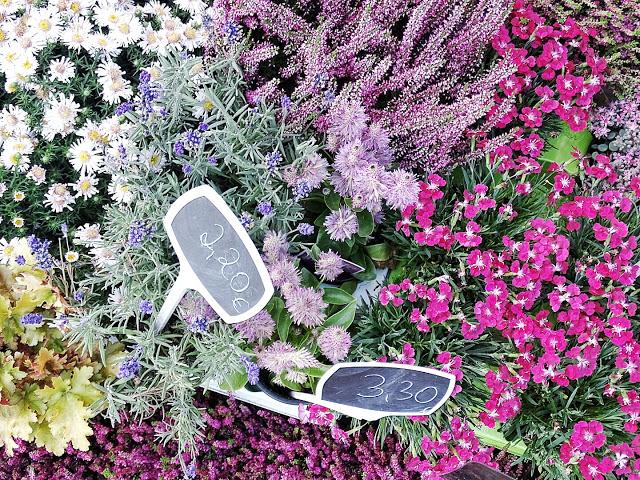 Auf der Mammilade|n-Seite des Lebens | Lifestyle-Blog | Bodendecker | Herbst | Herbstpflanzen