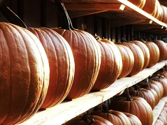Auf der Mammilade|n-Seite des Lebens | Lifestyle-Blog | Kürbis-Pommes und die besten Tipps dazu | Kürbisse | Halloween
