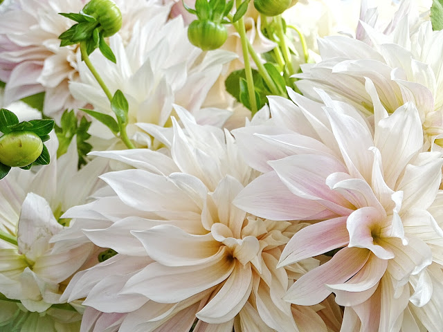 Auf der Mammilade n-Seite des Lebens   Personal Lifestyle Blog   Dahlien   Blumen Workshop München   Anastasia Benko   Dahlien