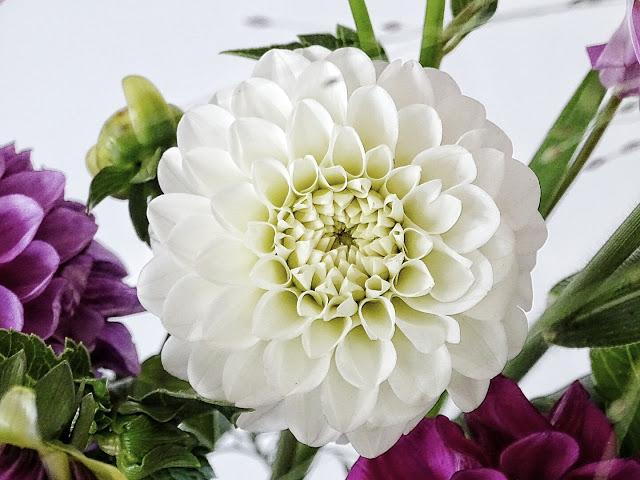 Auf der Mammilade n-Seite des Lebens   Personal Lifestyle Blog   Blume   Blüte   Dahlien   Dahlien weiß   Dahlien pink
