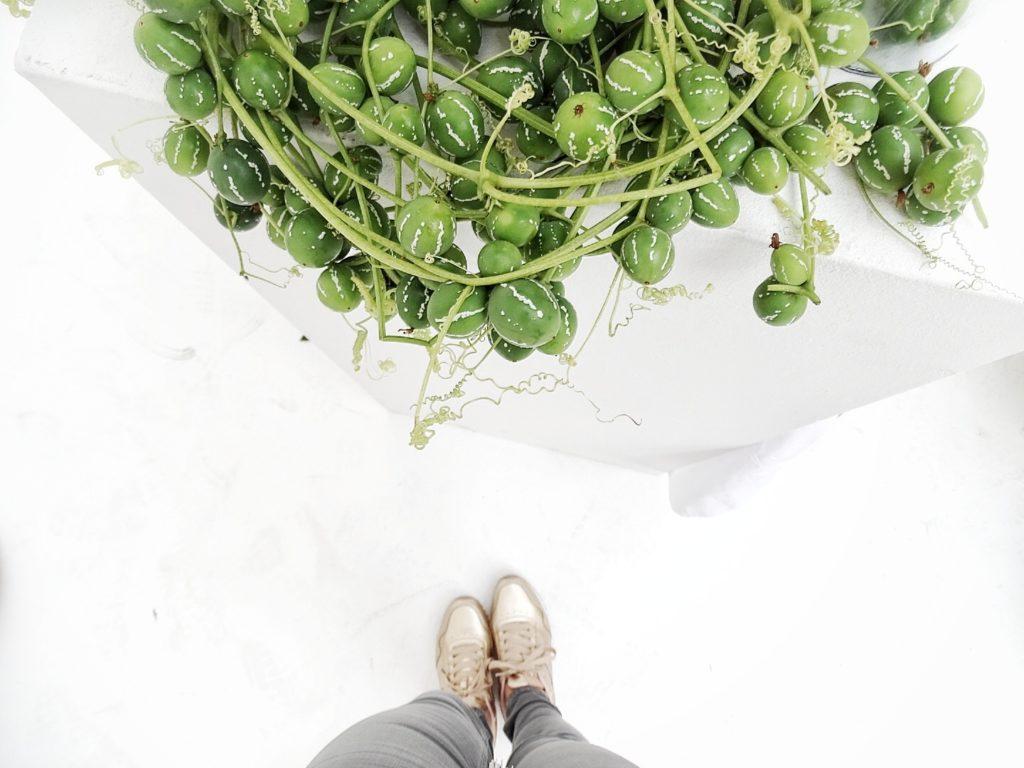 Auf der Mammilade|n-Seite des Lebens | Personal Lifestyle Blog | Kreativ mit Blumen und Pflanzen | Tipps für das Gestalten und Fotografieren von Stillleben | Fotostudio | Photo Props | goldene Schuhe