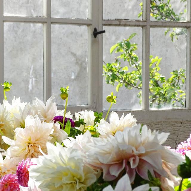 Auf der Mammilade n-Seite des Lebens   Personal Lifestyle Blog   Dahlien   Blumen Workshop München   Anastasia Benko   Alte Holz-Sprossenfenster   Botanischer Garten