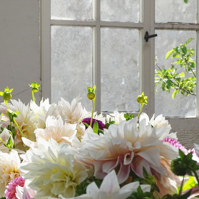 Auf der Mammilade n-Seite des Lebens   Personal Lifestyle Blog   Dahlien   Blumen Workshop München   Anastasia Benko   Alte Holz-Sprossenfenster   Botanischer Garten   Herbstblumen
