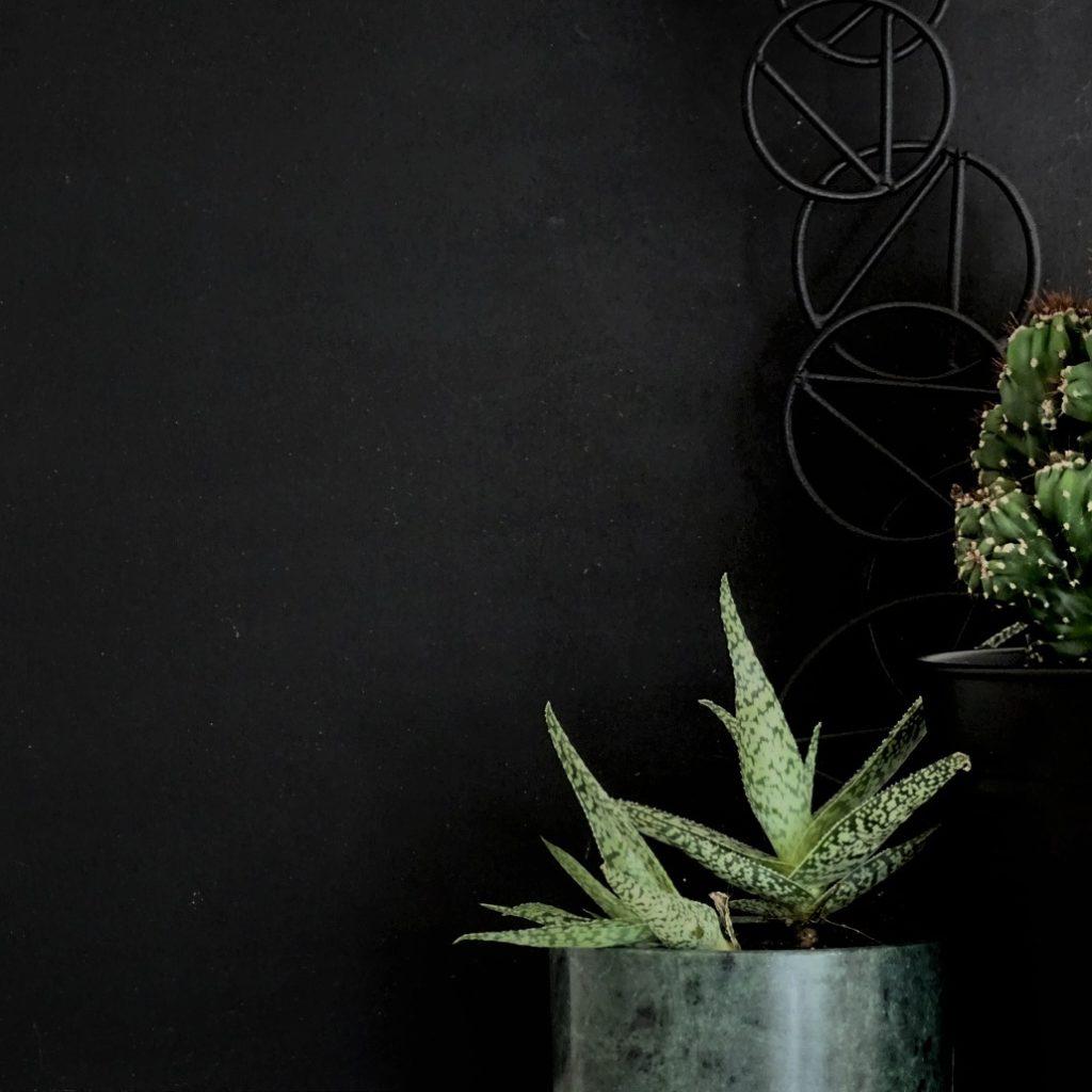 Auf der Mammilade|n-Seite des Lebens | Personal Lifestyle Blog | Kreativ mit Blumen und Pflanzen | Tipps für das Gestalten und Fotografieren von Stillleben | Urban Jungle Blogger | Desert Still Life | Sukkulenten