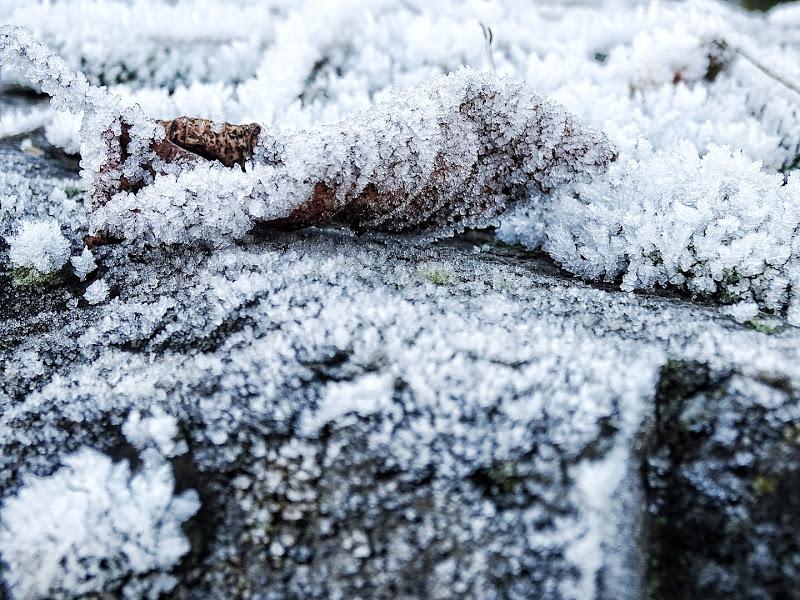 Auf der Mammilade|n-Seite des Lebens | Personal Lifestyle Blog | Lieblinge und Inspirationen der Woche | Winterimpressionen | Frost Makroaufnahme
