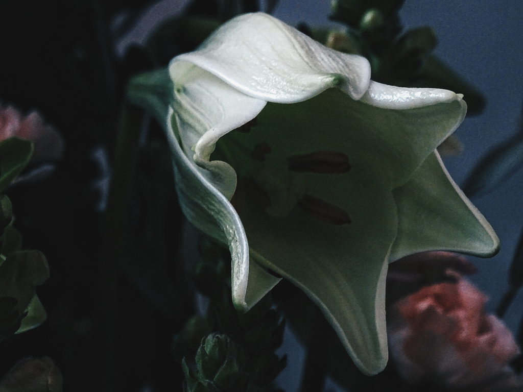 Auf der Mammilade|n-Seite des Lebens | Personal Lifestyle Blog | Blumen-Bouquet Botanic Art | sisterMAG Office Berlin