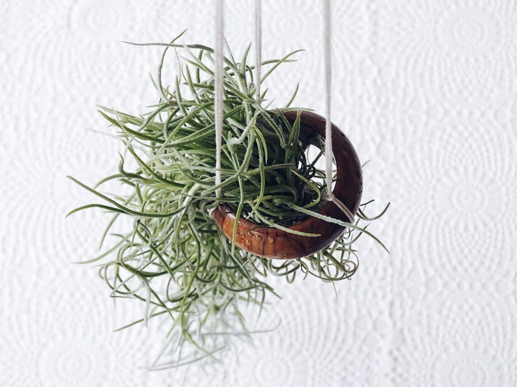 Auf der Mammilade|n-Seite des Lebens | Personal Lifestyle Blog | Haengende DIY-Gaerten mit Louisianamoos, Drahtkugeln und Holzringen | Schwebende Ostereier im DIY-Drahtkugel-Lichterketten-Nest