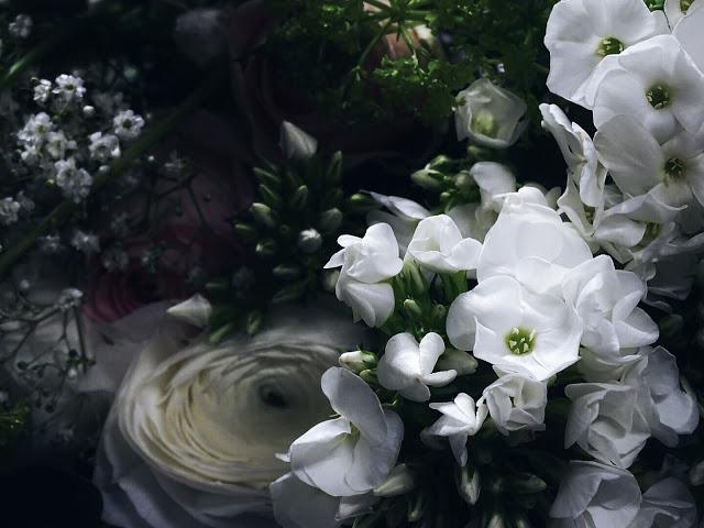 Auf der Mammilade-n-Seite des Lebens | Personal Lifestyle Blog | 5 Lieblinge, Weisheiten und Wohneinblicke mit viel Weiß der Woche | Pflanzen- und Kreativ-Workshop von 1000 Gute Gruende bei Blooms in Minden | Ranunkeln weiß |
