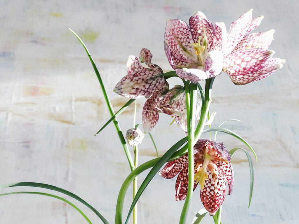 Auf der Mammilade|n-Seite des Lebens | Personal Lifestyle Blog | 1 Tag in 12 Bildern | Fotoaktion 12 von 12 | Frühlings-Deko mit Schachbrettblumen