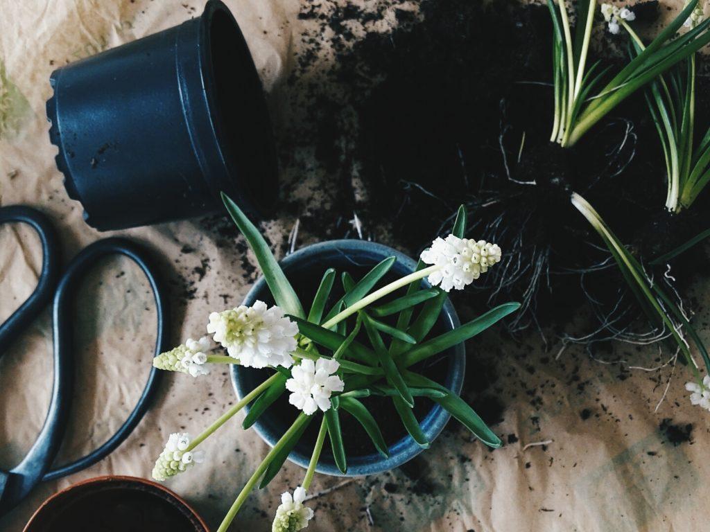 Auf der Mammilade|n-Seite des Lebens | Personal Lifestyle Blog | 1 Tag in 12 Bildern | Fotoaktion 12 von 12 | Frühlings-DIY-Deko mit Frühblühern