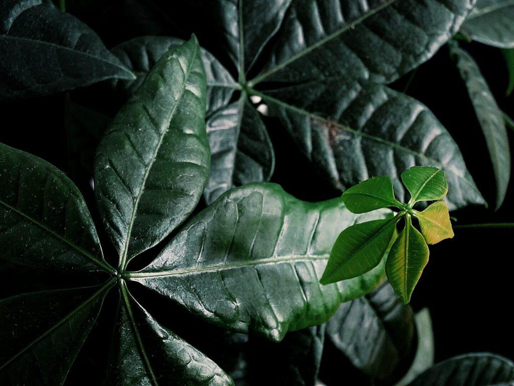 Auf der Mammilade|n-Seite des Lebens | A personal lifestyle and interior blog | Grünpflanzen | Urban Jungle Bloggers