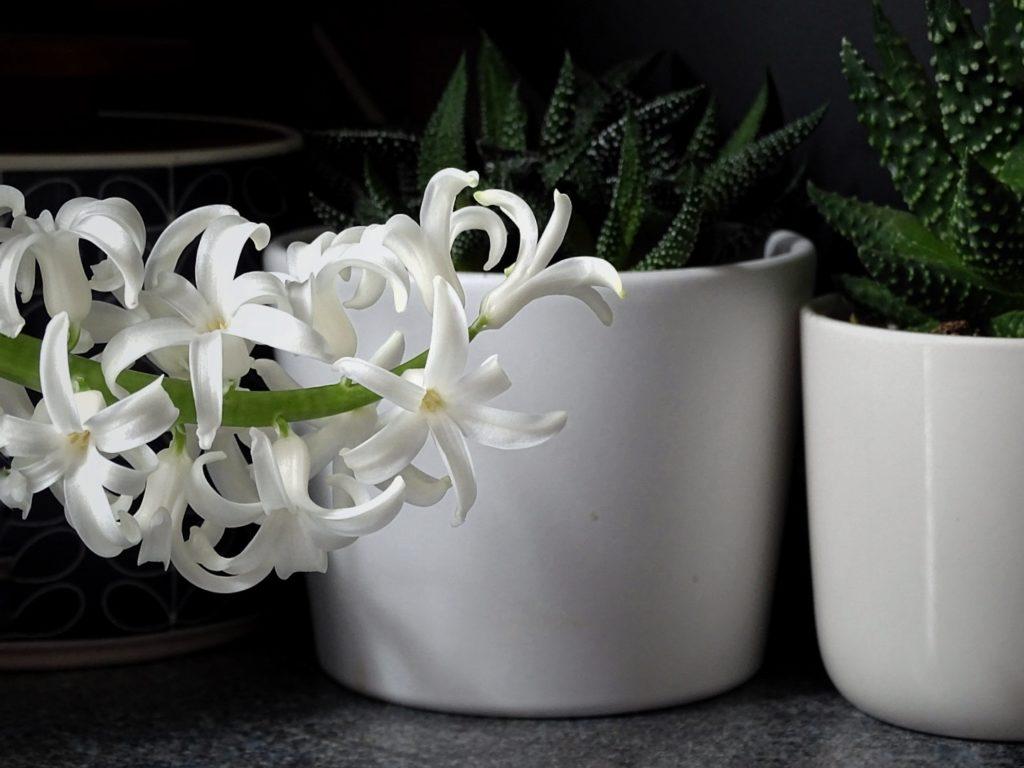 Auf der Mammilade|n-Seite des Lebens | A personal lifestyle and interior blog | DIY-Deko Frühling und Ostern | weiße Hyazinthe