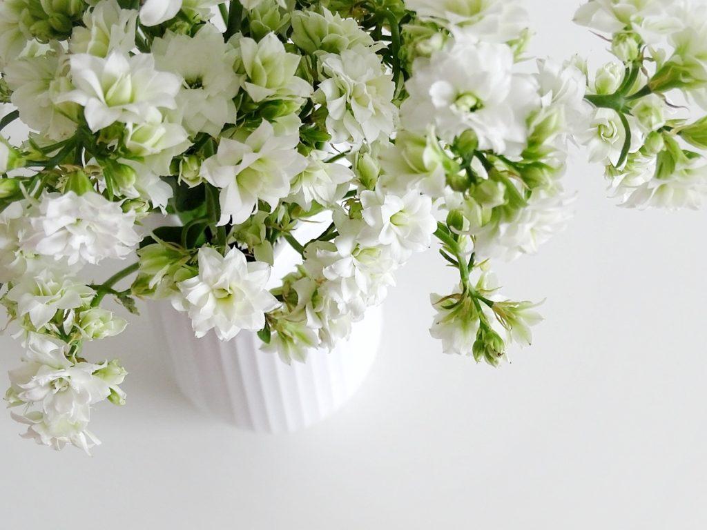 Auf der Mammilade|n-Seite des Lebens | A personal lifestyle and interior blog | DIY-Deko Frühling und Ostern | weiße Kalanchoe