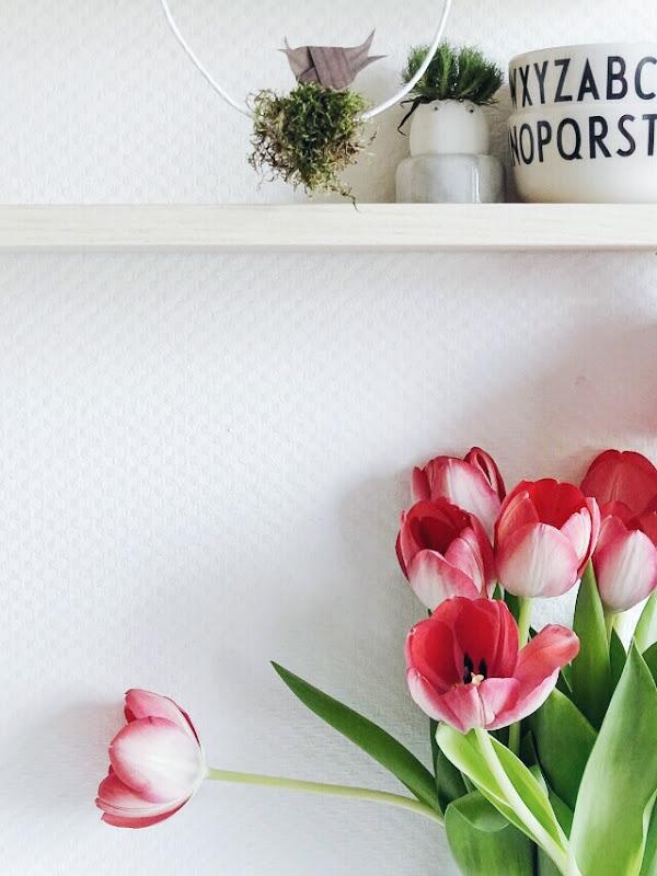 Tulpen mit rot-weißem Farbverlauf | Auf der Mammilade|n-Seite des Lebens | Personal Lifestyle und Interior Blog