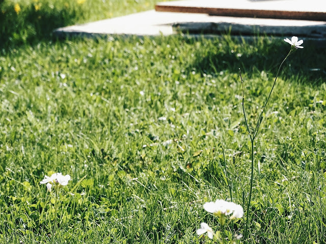 Bautagebuch | Familie Mammilade baut ein Haus - Teil 2 | Erste Schritte, Bauplanungen, Entscheidungen und der Kauf des Grundstücks | Personal Lifestyle, DIY and Interior Blog | Auf der Mammiladen-Seite des Lebens