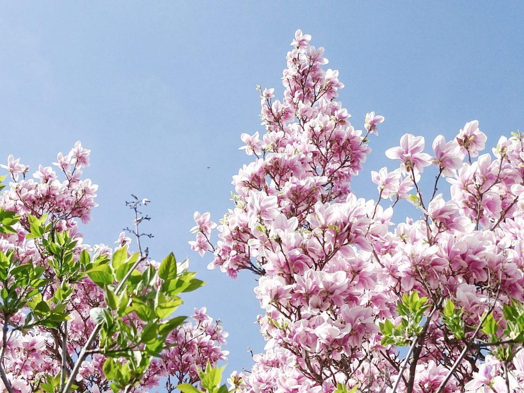 DIY-Ostereier-Vasen im Grasnest hängend für den Osterstrauch | Magnolien-Blüte | Inspirationen | Personal Lifestyle, DIY and Interior Blog | Auf der Mammiladen-Seite des Lebens