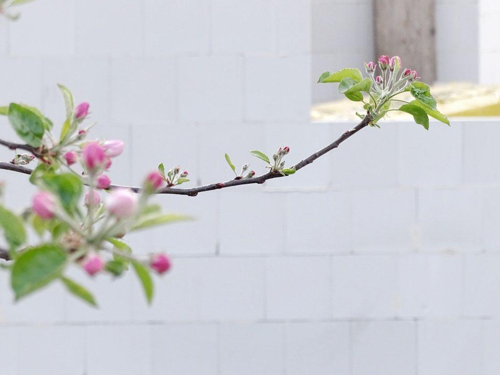 DIY-Ostereier-Vasen im Grasnest hängend für den Osterstrauch | Apfelblüte | Inspirationen | Personal Lifestyle, DIY and Interior Blog | Auf der Mammiladen-Seite des Lebens