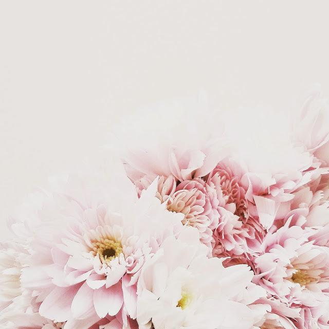 Chrysamthemen rose | Über das Bloggen ohne Nische plus Monatsblick April und Mail | Personal Lifestyle, DIY and Interior Blog | Auf der Mammiladen-Seite des Lebens