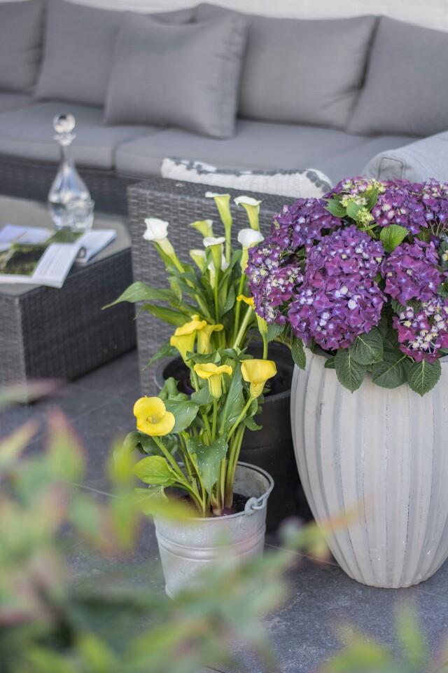 Deko-Ideen und Tipps für Hortensien   Lieblinge und Inspirationen der Woche   Personal Lifestyle, DIY and Interior Blog   Auf der Mammiladen-Seite des Lebens