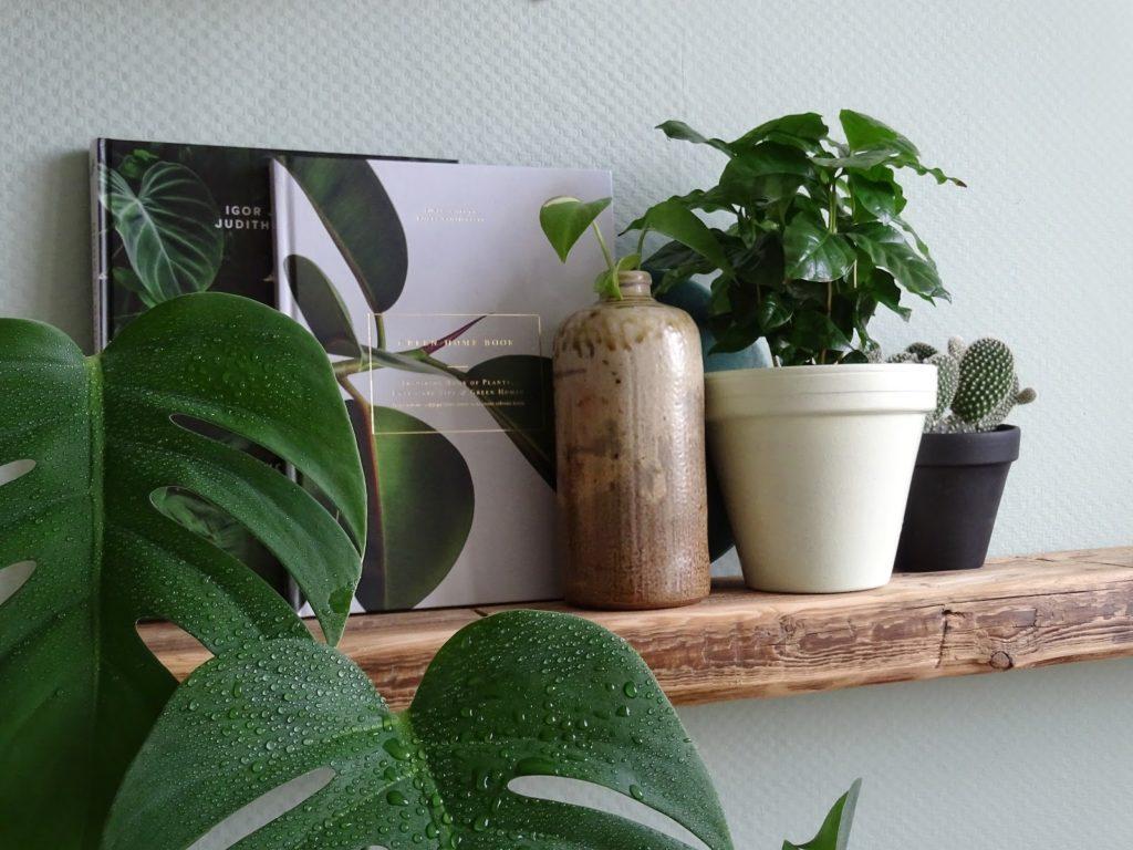 Küchen-Makeover mit neuer Wandfarbe in Mint + Styling-Ideen für Regale + Deko-Ideen mit Pflanzen und einem Altholzregal - www.mammilade.blogspot.de