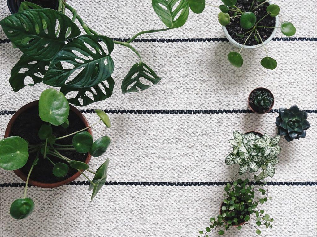 Indoor-Pflanzen-Sammlung - Fotoaktion #12von12 und 1 Tag in 12 Bildern - https://mammilade.blogspot.de