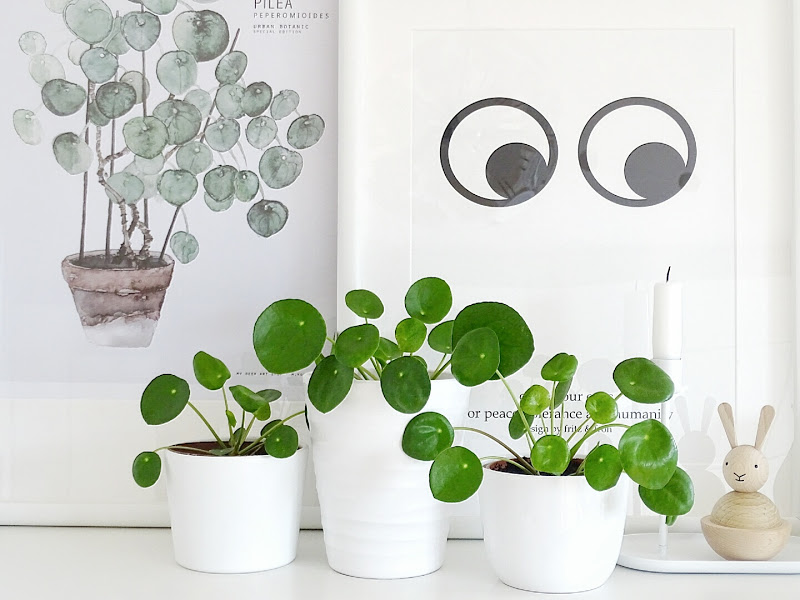 Vermehrungs- und Pflege-Tipps für die Pilea Peperomioides - 12 DIY-Nachmach-Ideen, Deko-Inspirationen und Rezepte für den November - https://mammilade.blogspot.de