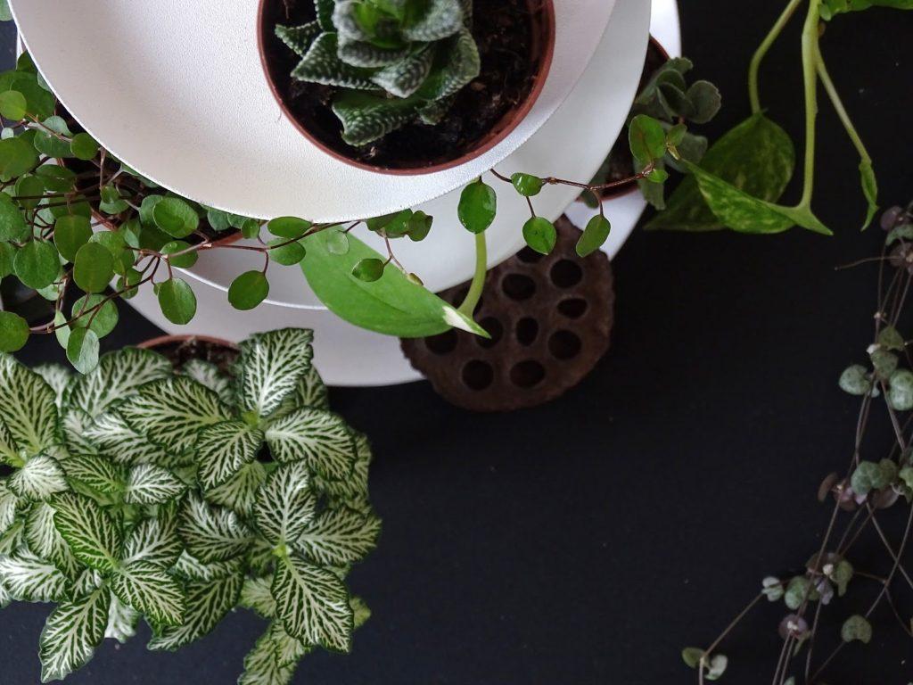 5 Deko-, Verwendungs- und Geschenk-Ideen mit Etageren - Etageren als Pflanzenständer - https://mammilade.blogspot.de