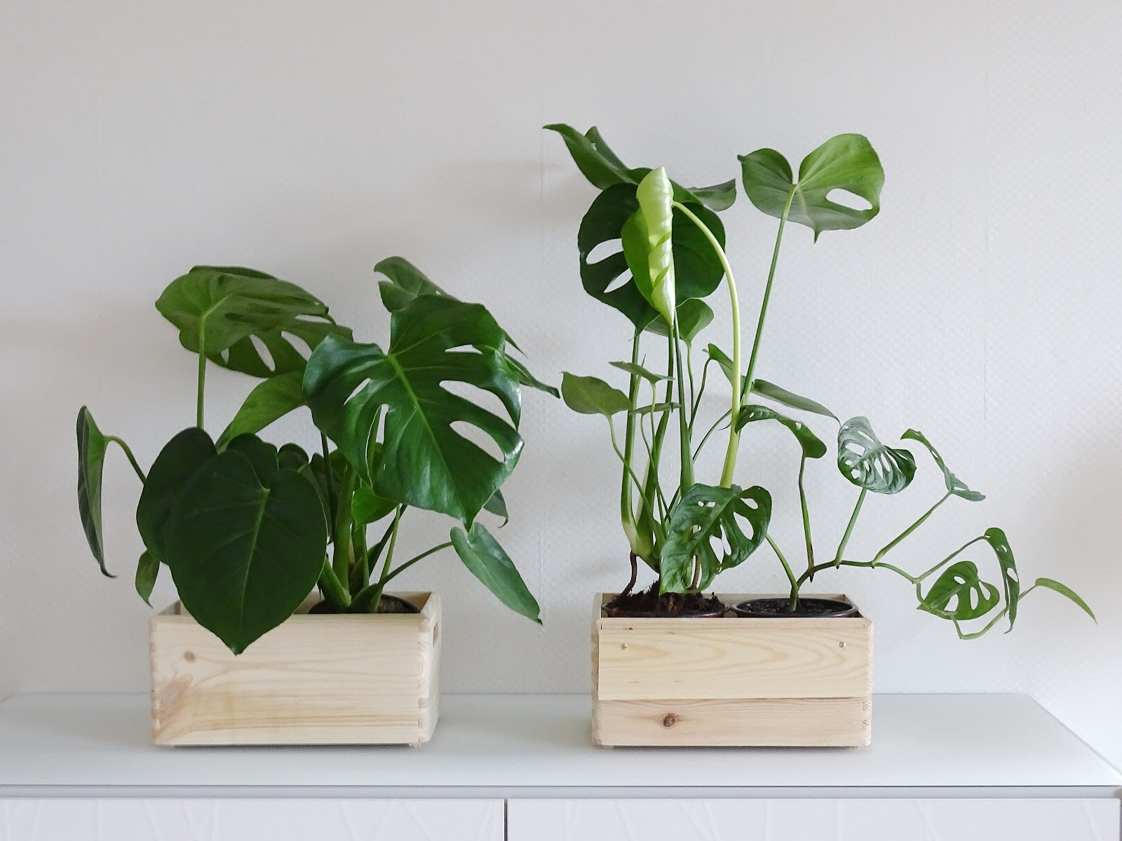 DIY-Blumenkasten zum Aufhängen an Treppengeländern und Galerien plus Pflegetipps und Informationen zur Monstera-Pflanze | mammilade.com