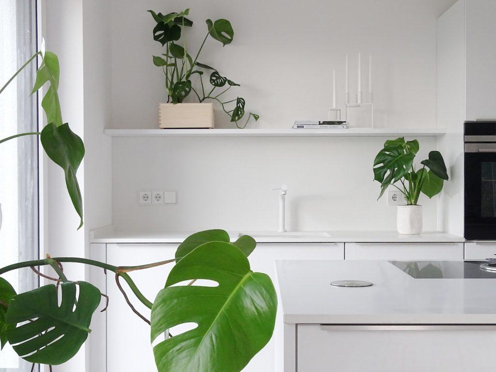 Unsere neue Küche und ein kleiner Monstera-Garten | Fotoaktion #12von12 und 1 Tag in 12 Bildern | https://mammilade.blogspot.de