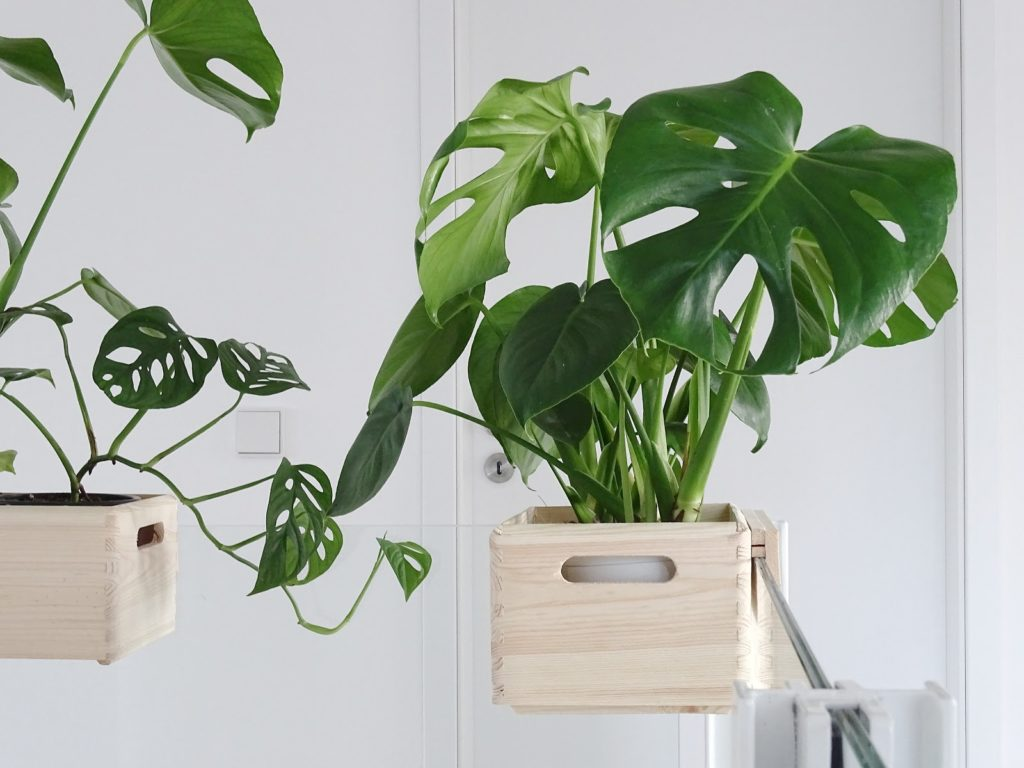 DIY-Blumenkasten zum Aufhängen an Treppengeländern und Galerien plus Pflegetipps und Informationen zur Monstera-Pflanze | https://mammilade.blogspot.de