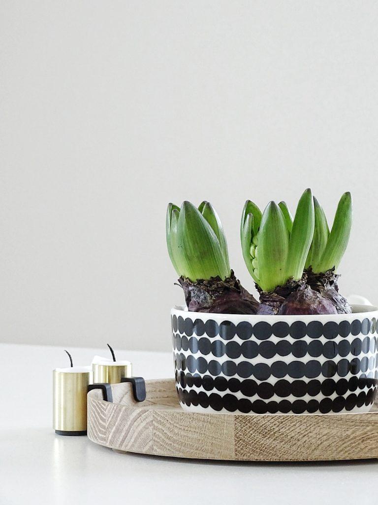 Alternative zu Übertöpfen: Pflanzen in Schalen, Tassen und Bechern | https://mammilade.blogspot.de