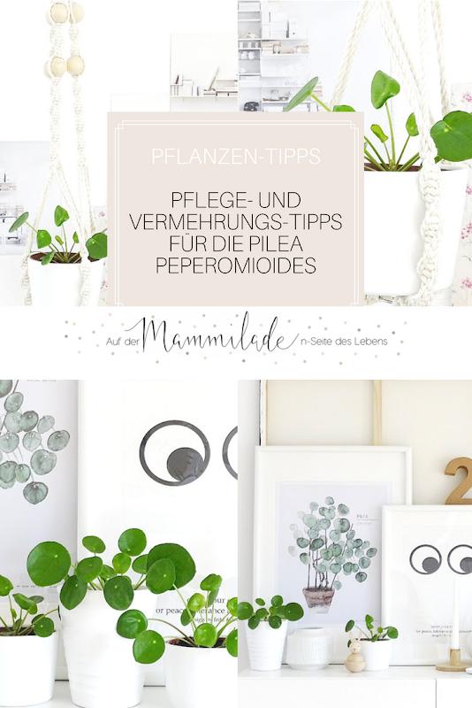 Pflege- und Vermehrungs-Tipps für die Pilea Peperomioides | 17 + 5 DIY-Nachmach-Ideen und Rezepte für den Juni und Juli | https://mammilade.blogspot.de