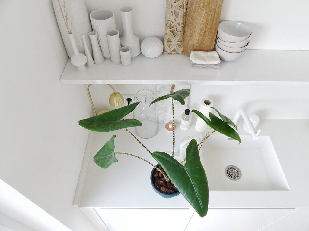 Weiße Küche und Zebrapflanze | Fotoaktion #12von12 | 1 Tag in 12 Bildern im Juli | https://mammilade.blogspot.de