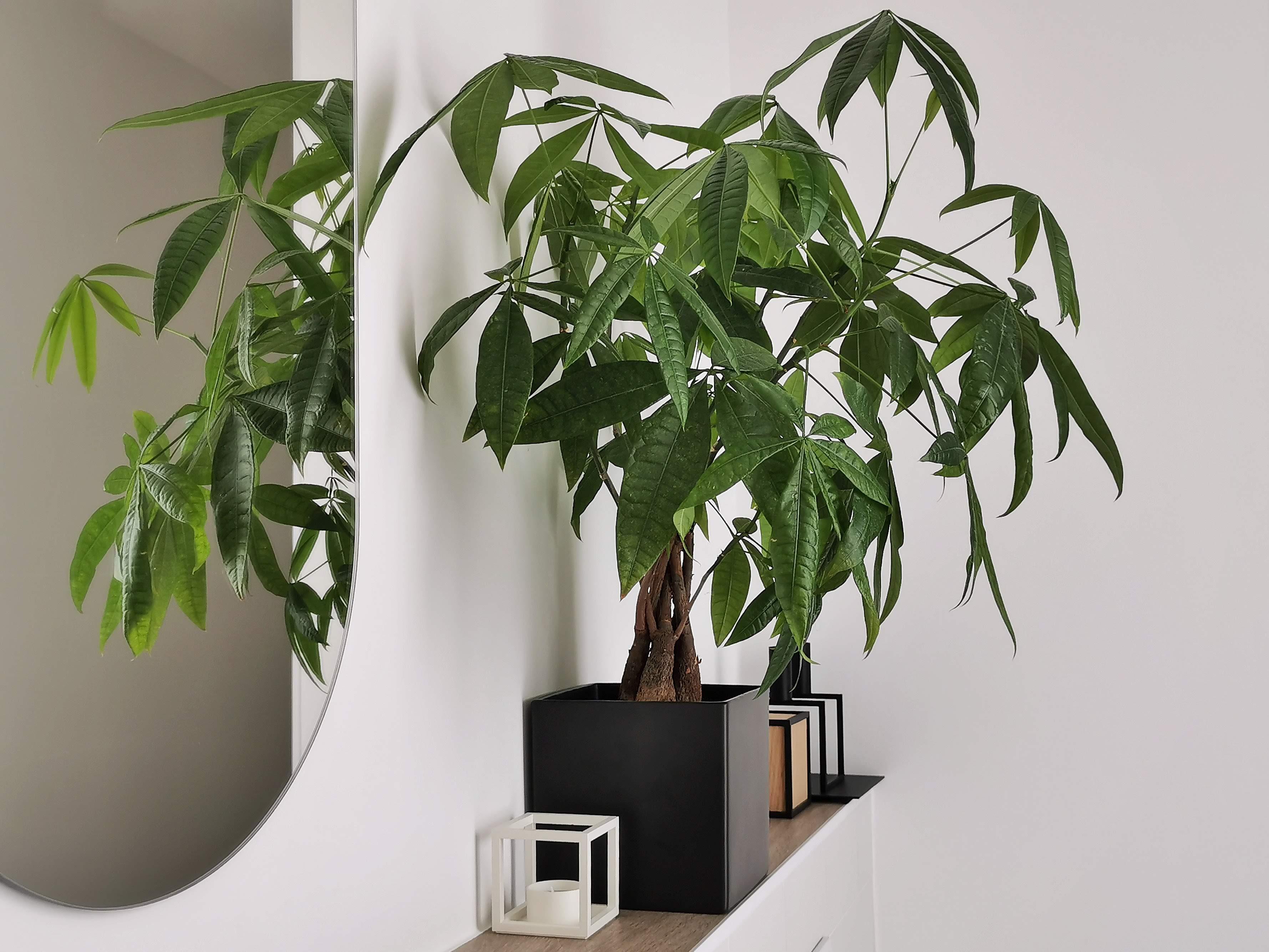 Gestaltung und Deko-Ideen im Badezimmer | mammilade.com